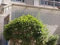出售平海路2幢3层半落地灿头7室2厅6卫220平米350万住宅
